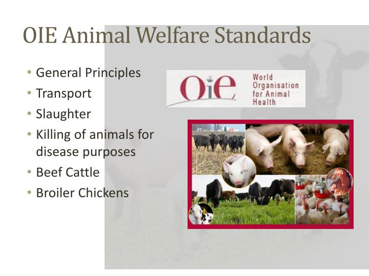 Oie animal welfare standards
