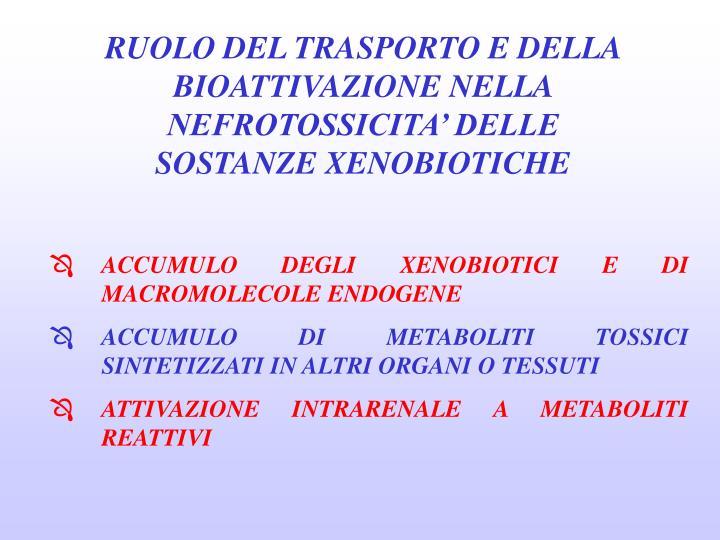 RUOLO DEL TRASPORTO E DELLA BIOATTIVAZIONE NELLA NEFROTOSSICITA' DELLE SOSTANZE XENOBIOTICHE