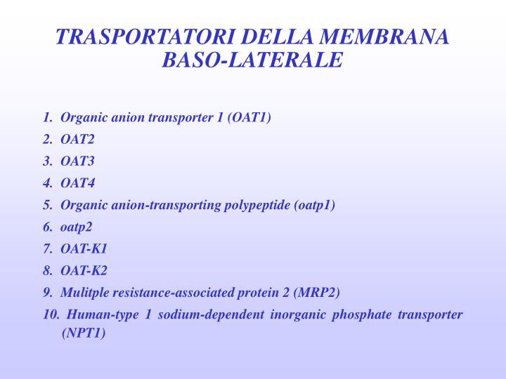 TRASPORTATORI DELLA MEMBRANA