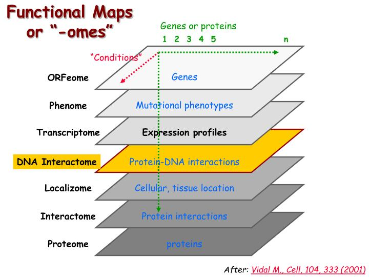 Functional maps or omes