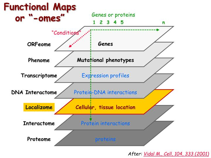 Functional Maps