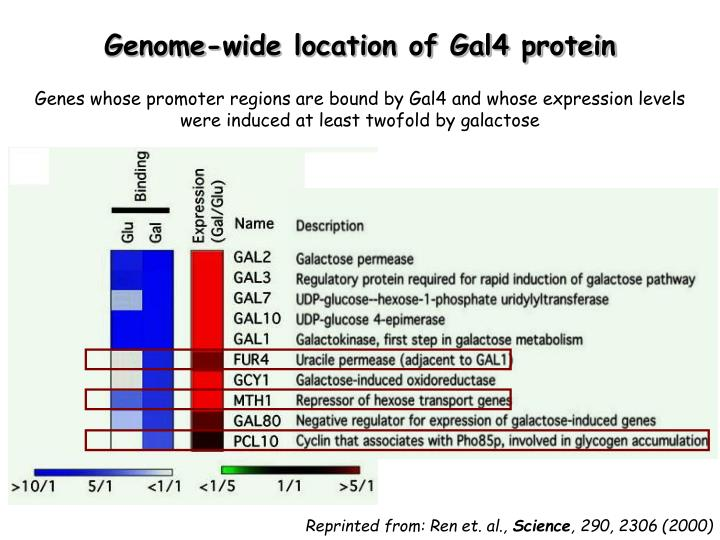 Genome-wide location of Gal4 protein