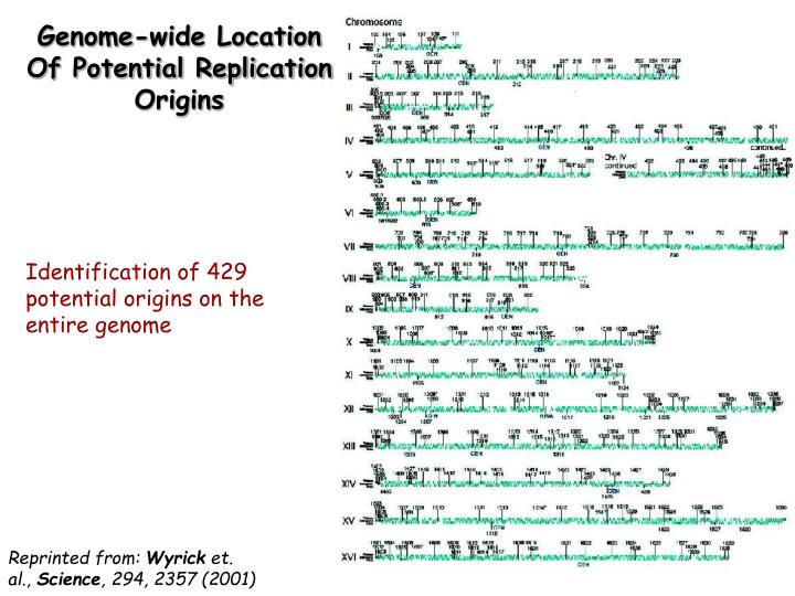 Genome-wide Location Of Potential Replication Origins