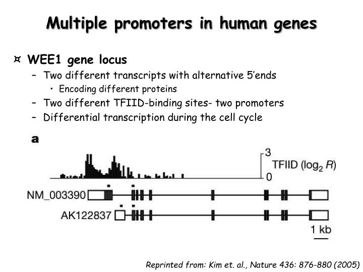Multiple promoters in human genes