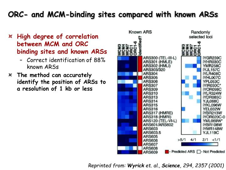 High degree of correlation between MCM and ORC binding sites and known ARSs