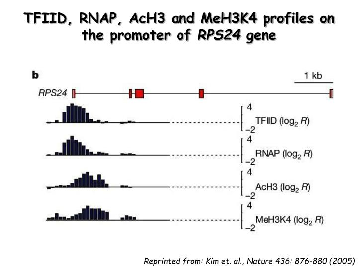 TFIID, RNAP, AcH3 and MeH3K4 profiles on the promoter of