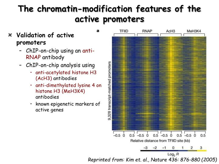 The chromatin-modification features of the active promoters