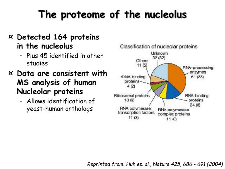 The proteome of the nucleolus