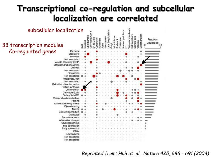 Transcriptional co-regulation and subcellular localization are correlated