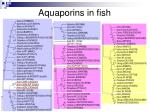 aquaporins in fish