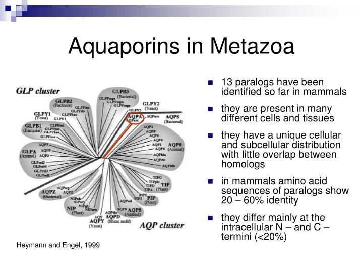 Aquaporins in Metazoa