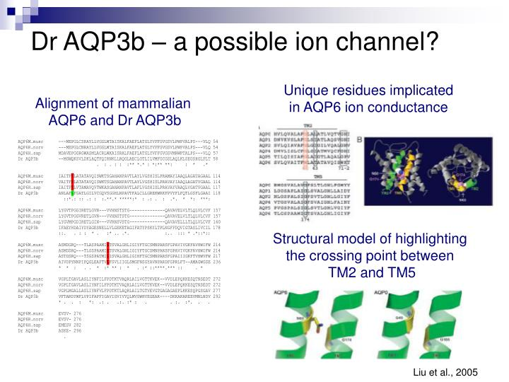 Dr AQP3b – a possible