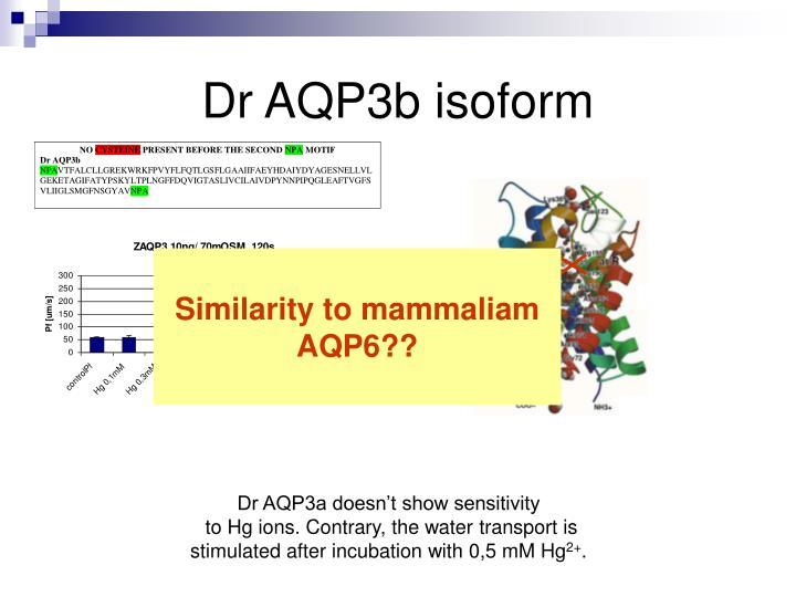 Dr AQP3b