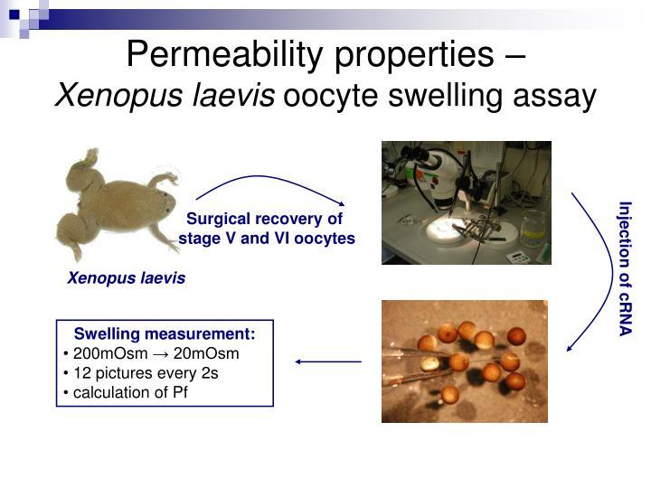 Permeability properties –