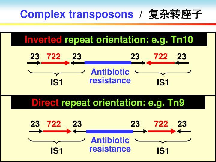 Complex transposons