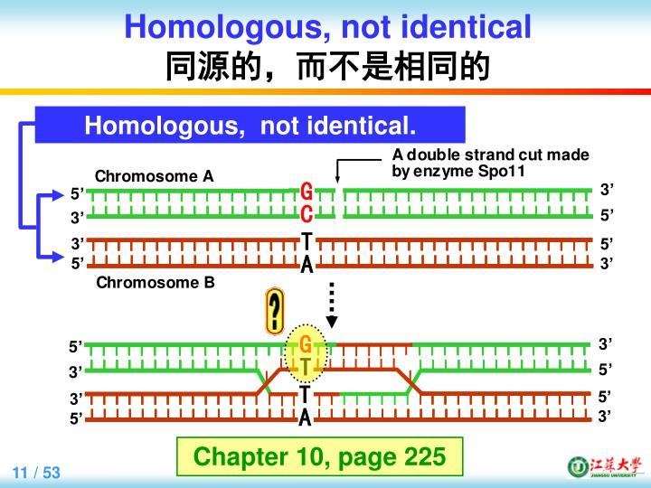 Homologous,
