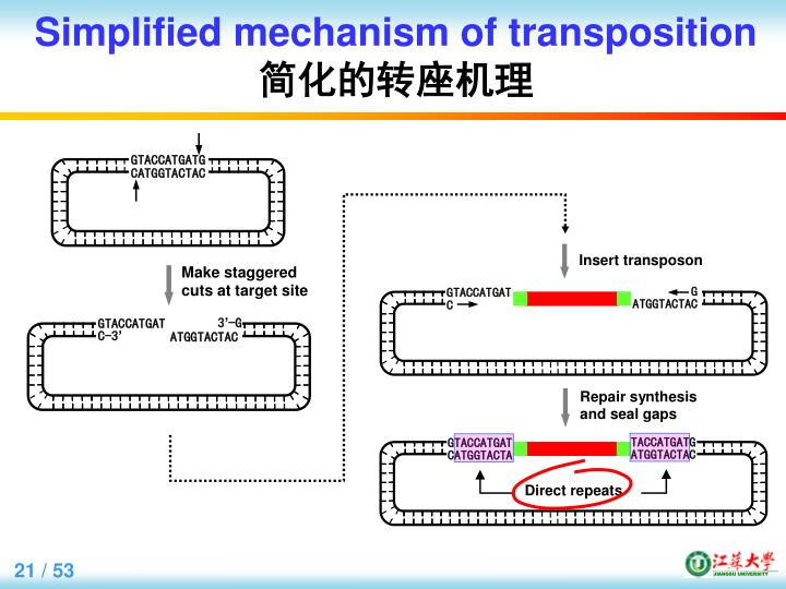Simplified mechanism of transposition