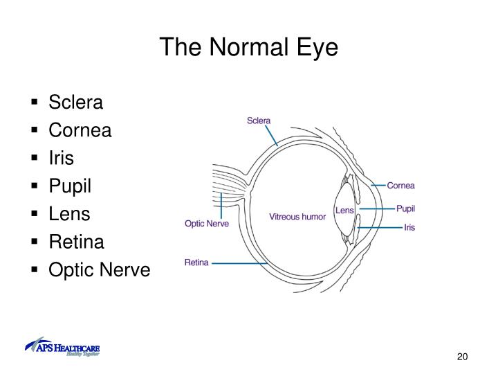 The Normal Eye