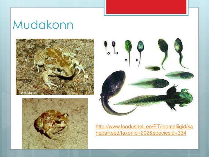 Mudakonn