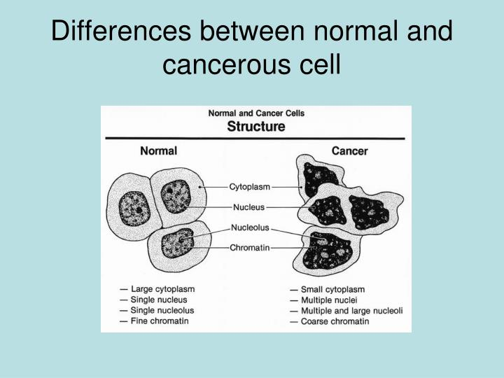 Differences between normal and cancerous cell