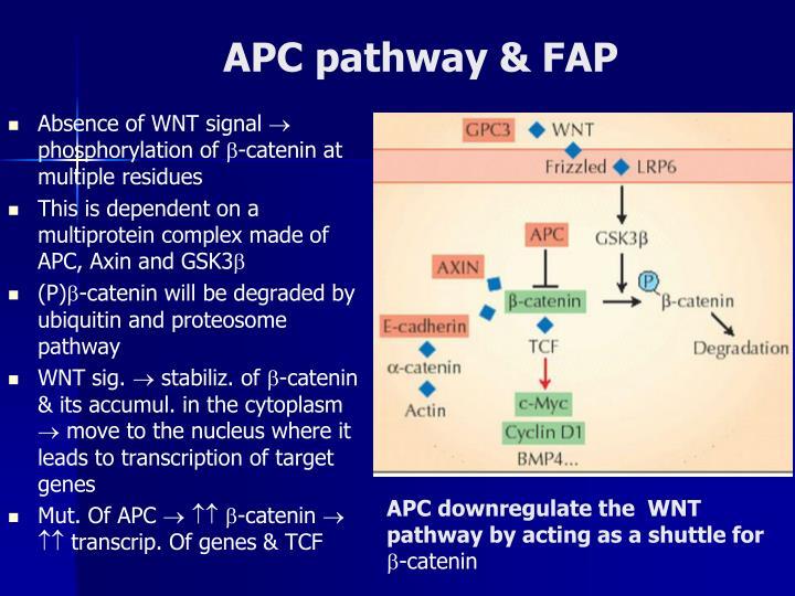 APC pathway & FAP