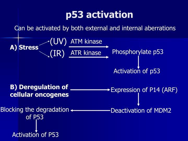 p53 activation