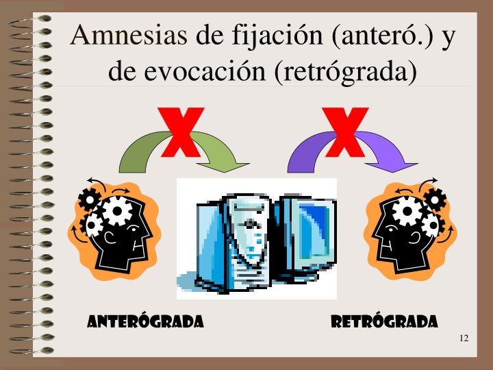 Amnesias