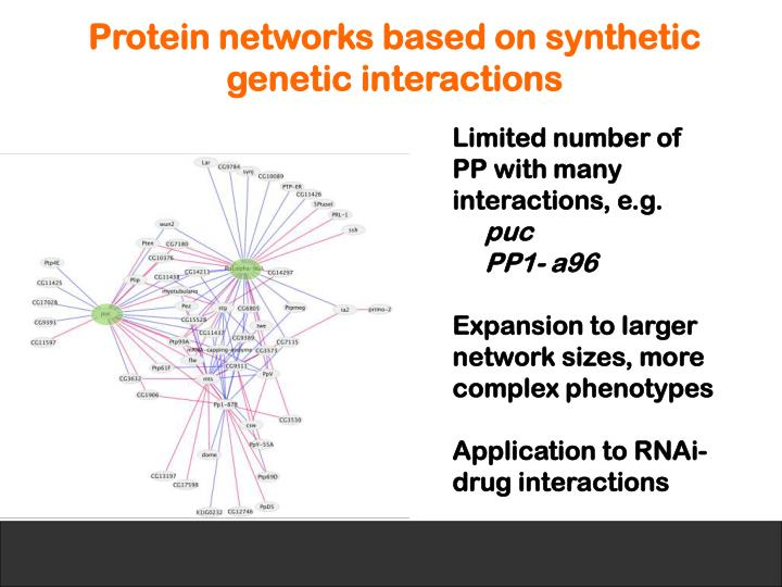 Protein networks based on synthetic genetic interactions