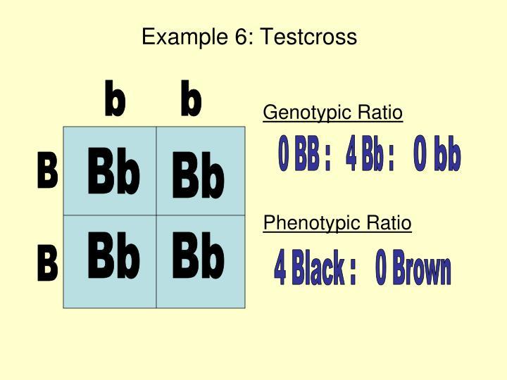 Example 6: Testcross