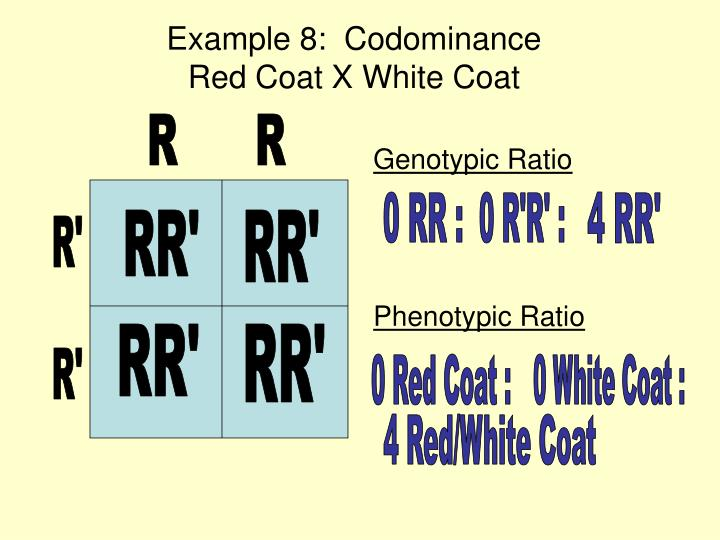 Example 8:  Codominance                         Red Coat X White Coat