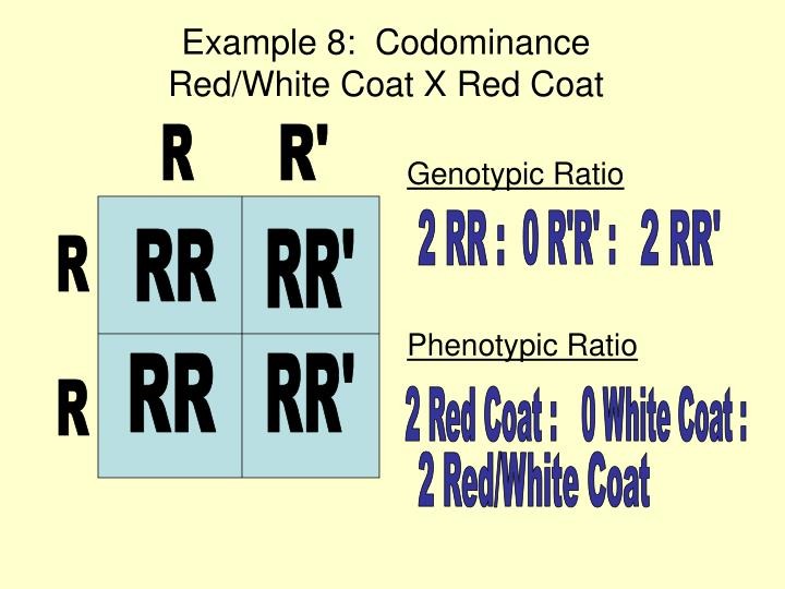 Example 8:  Codominance                         Red/White Coat X Red Coat