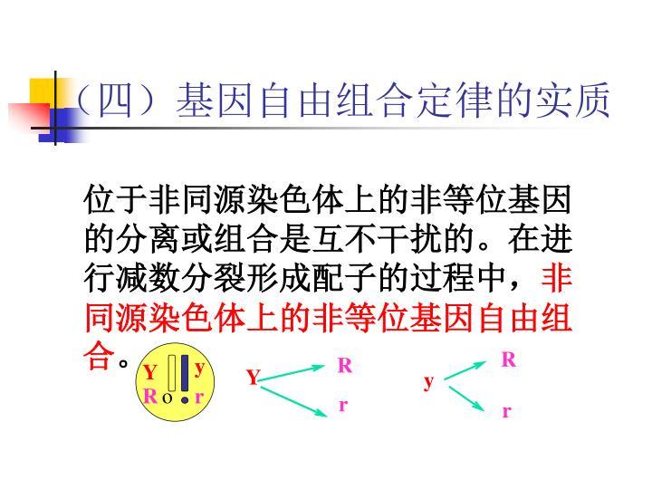 (四)基因自由组合定律的实质