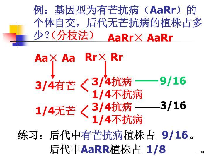 例:基因型为有芒抗病(