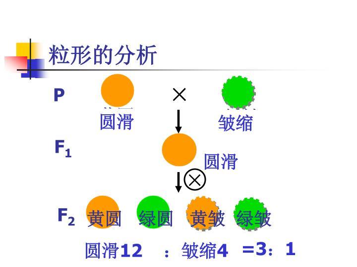 (一)两对相对性状的遗传实验