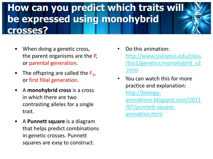 How can you predict which traits will be expressed using monohybrid crosses?
