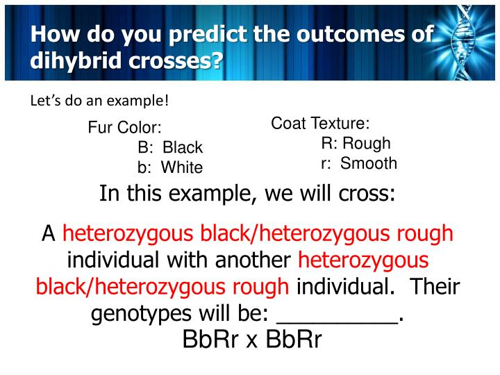 How do you predict the outcomes of dihybrid crosses?