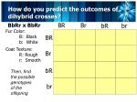 how do you predict the outcomes of dihybrid crosses3