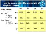 how do you predict the outcomes of dihybrid crosses4