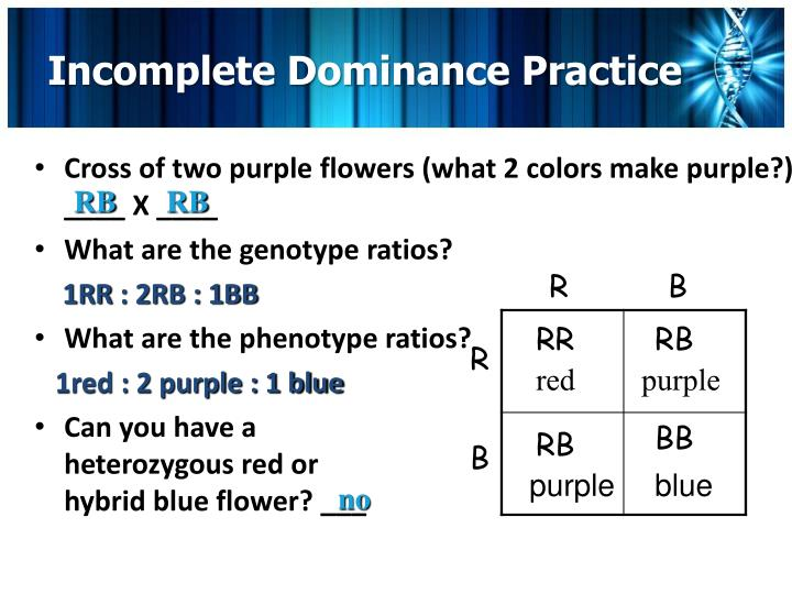 Incomplete Dominance Practice