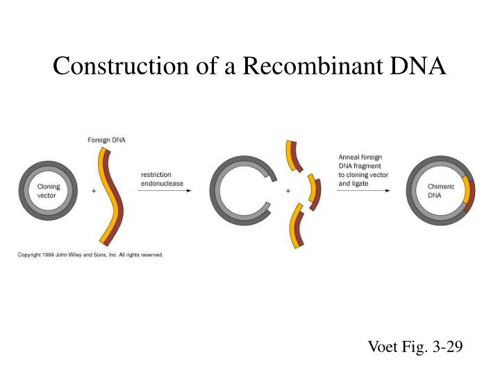 Construction of a Recombinant DNA