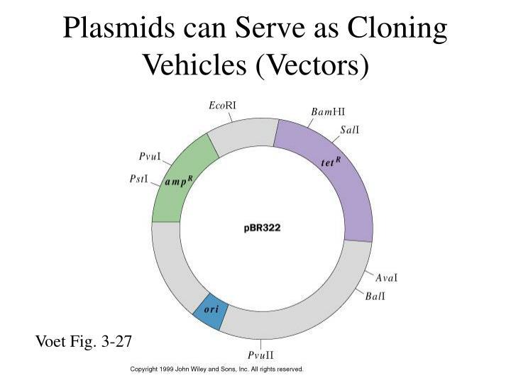 Plasmids can Serve as Cloning Vehicles (Vectors)