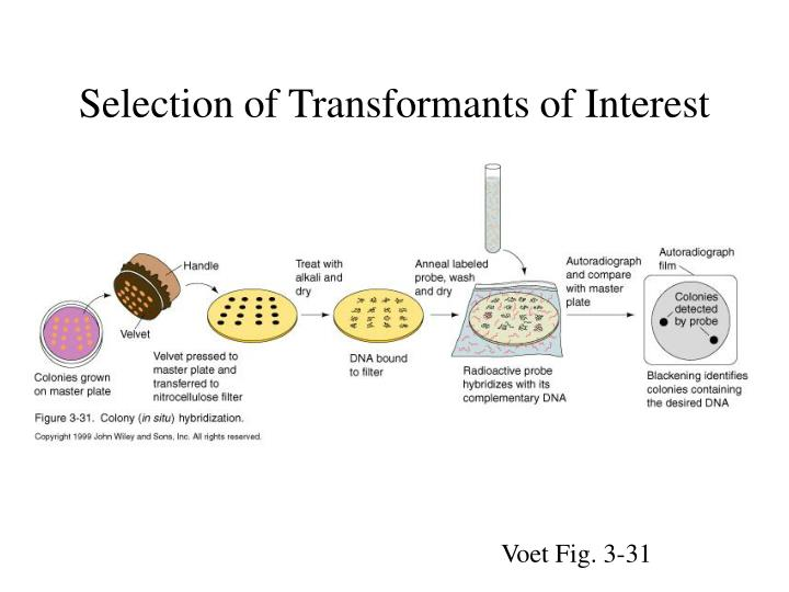 Selection of Transformants of Interest