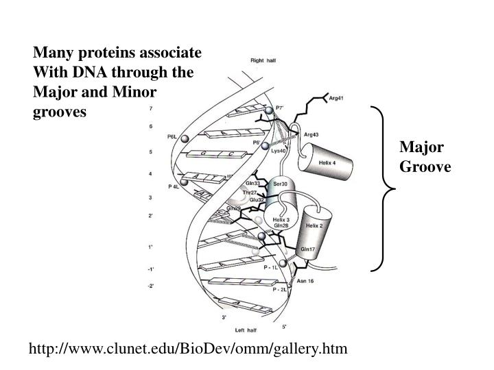 Many proteins associate