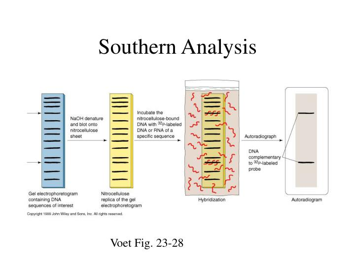 Southern Analysis