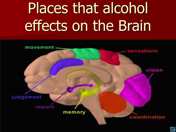 Places that alcohol effects on the Brain