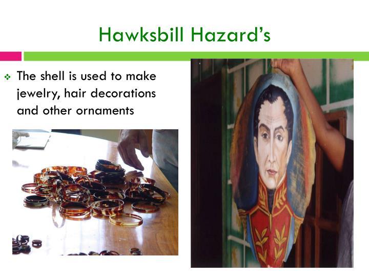 Hawksbill Hazard's