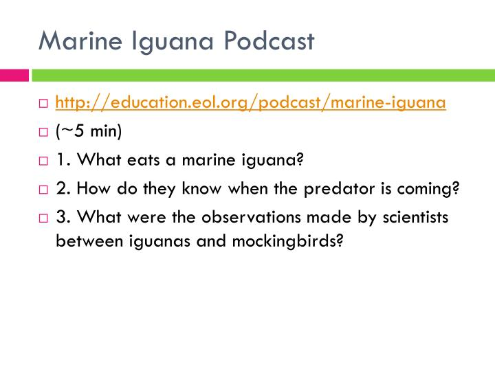 Marine Iguana Podcast