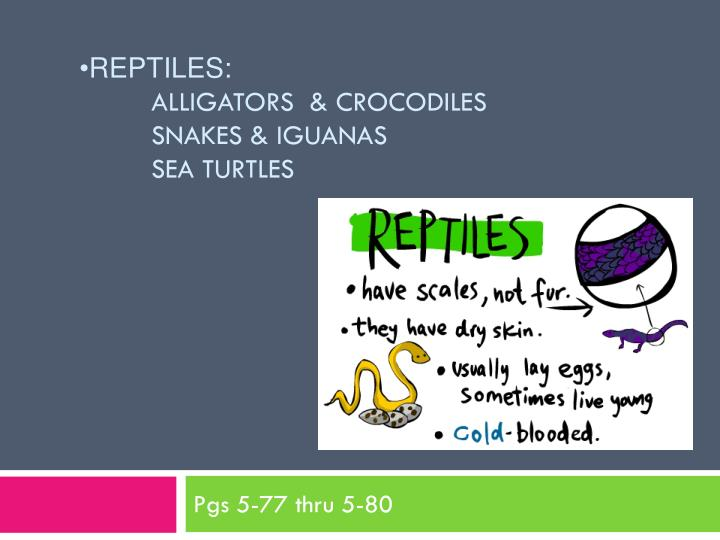Reptiles alligators crocodiles snakes iguanas sea turtles
