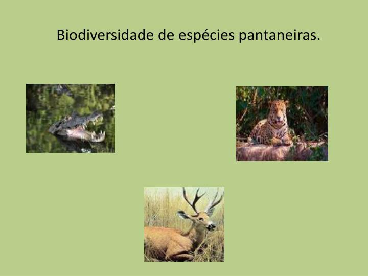 Biodiversidade de espécies pantaneiras.