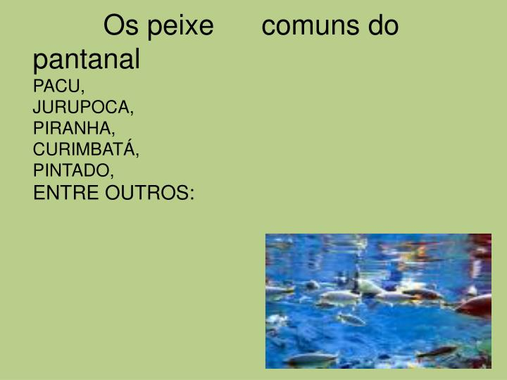 Os peixe      comuns do pantanal
